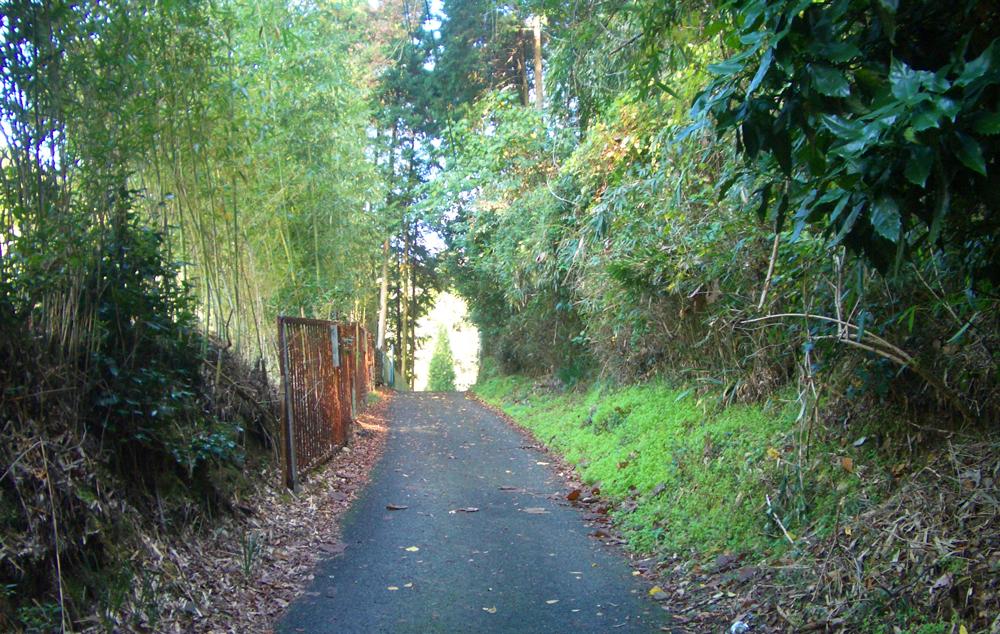 山の辺の道の山道