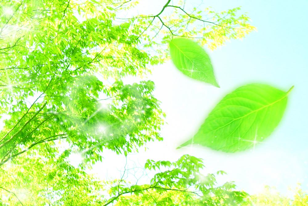 木漏れ日と木の葉