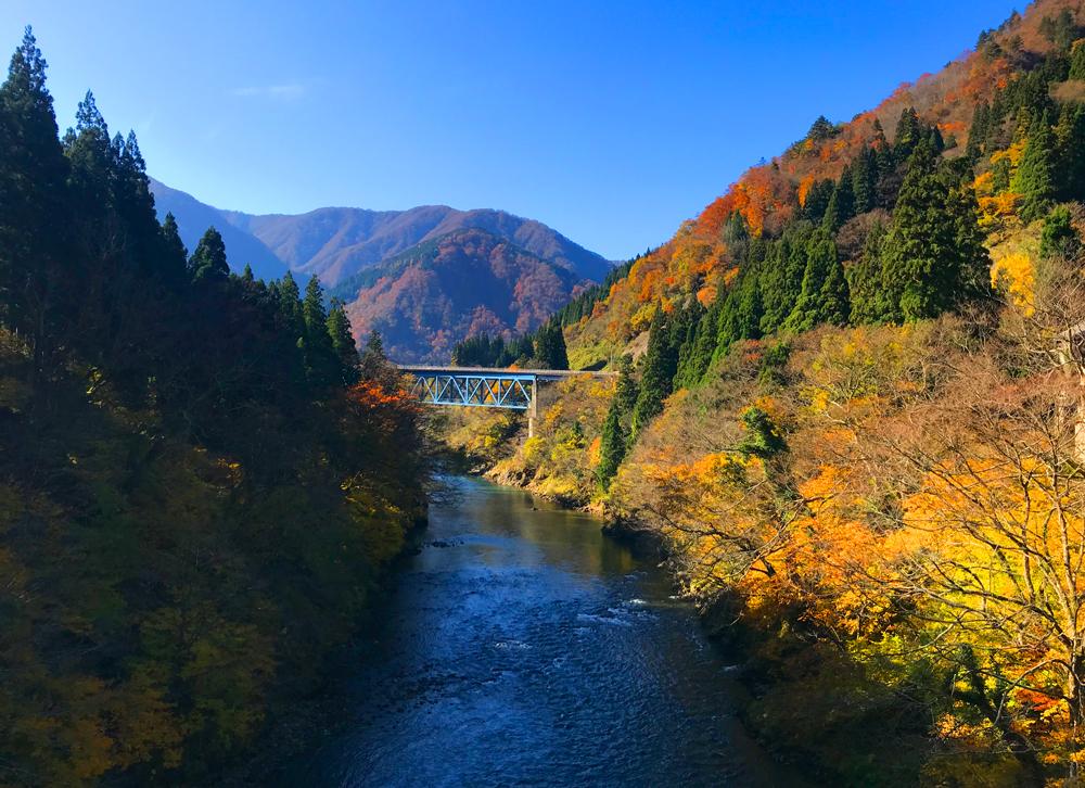夏の庄川湯出島橋から見た紅葉の庄川