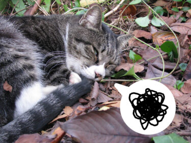 夢を見る猫